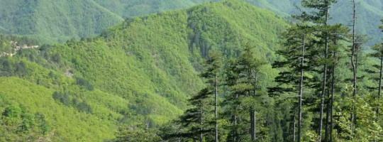 Τέταρτο τεύχος του Ενημερωτικού Δελτίου του έργου ForestLife